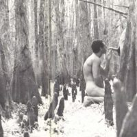 cock in the woods