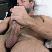 magnificence cock
